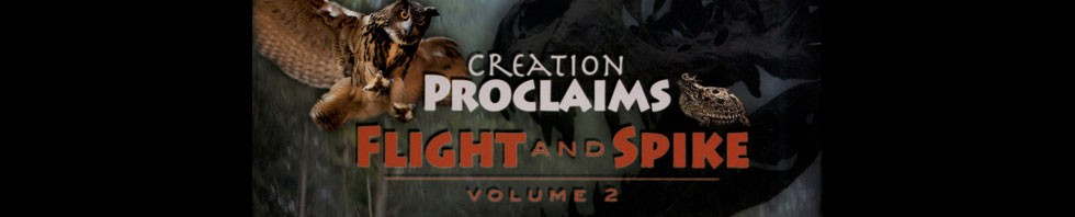 Creation Proclaims 2 DVD