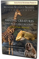 Amazing Creatures that Proclaim Creation: Marvels of God's Handiwork